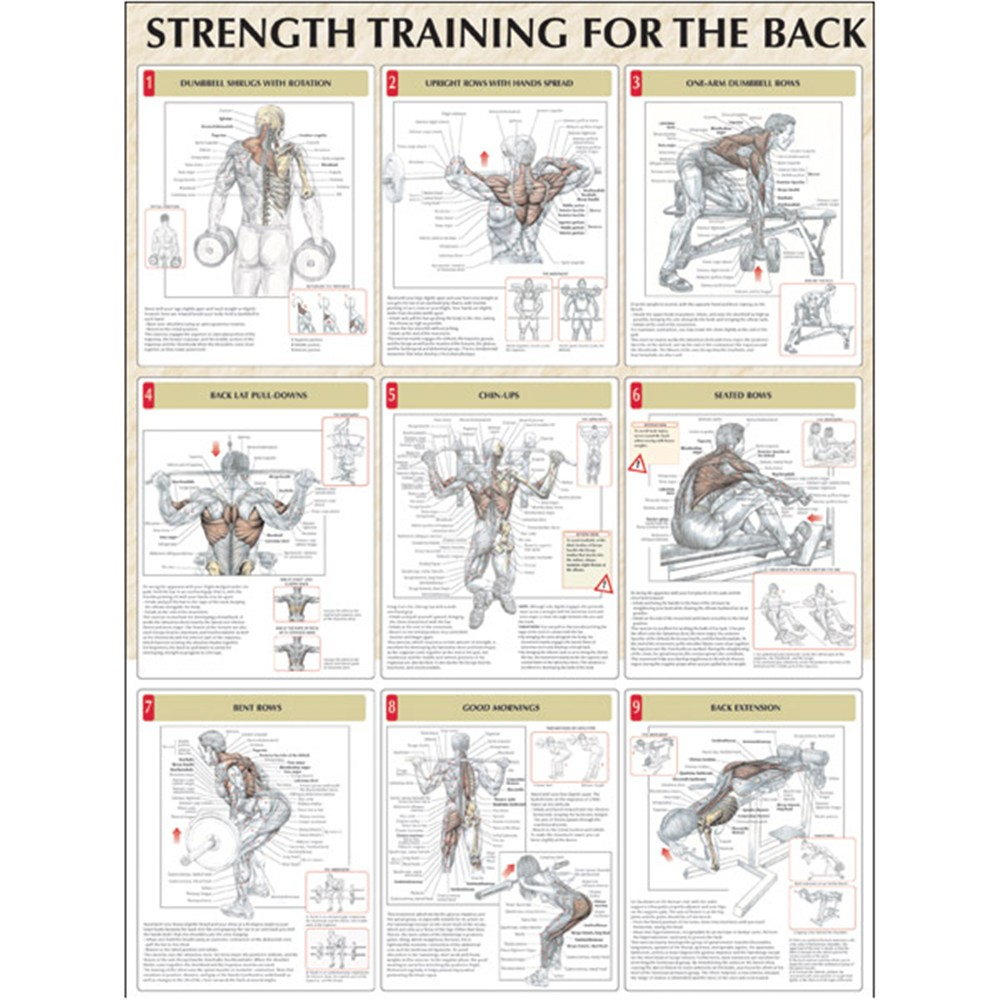 Delavier s anatomy for bigger stronger arms pdf download